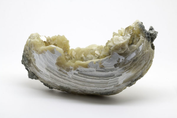 FOSSILIZED CLAM WITH CALCITE