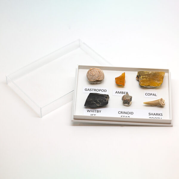 fossil collection gift set